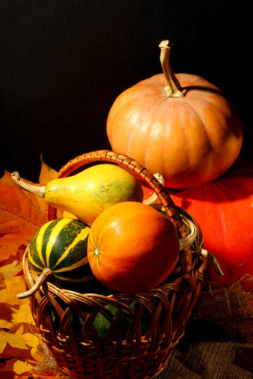 Autumn still-life picture for №35341