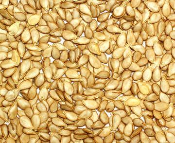 Texture of pumpkin seeds №35545