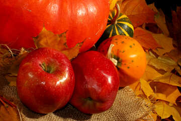 Autumn harvest of vitamins №35338