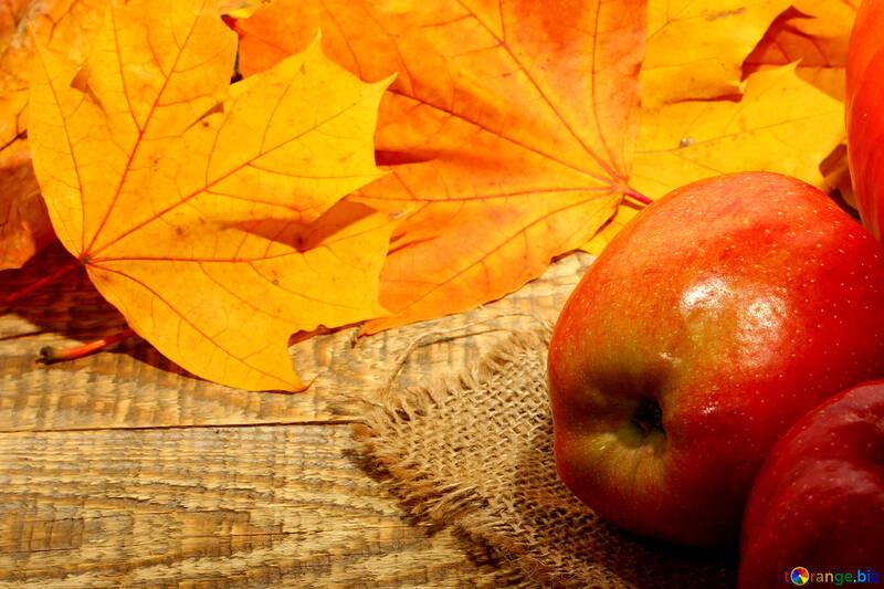 Autumn apples №35166