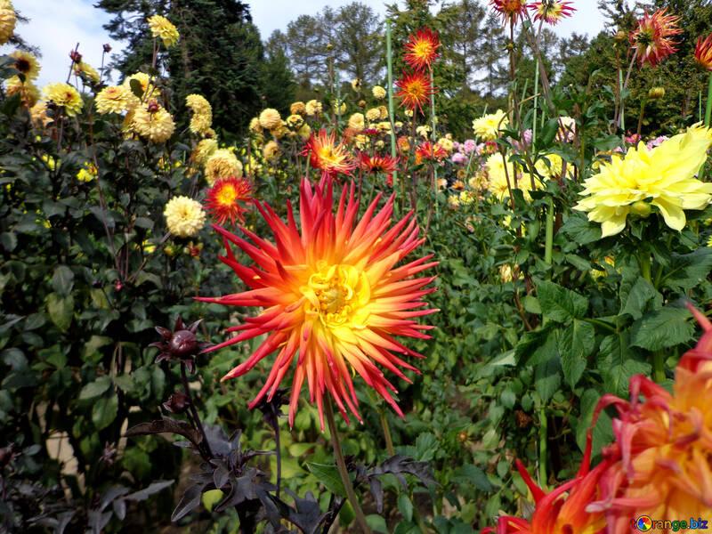 Blume wie Sterne №35946