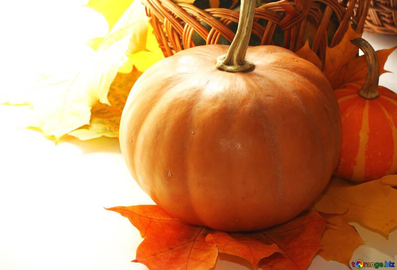 Herbst Hintergrund mit Kürbissen in Isolation für Gratulation №35291