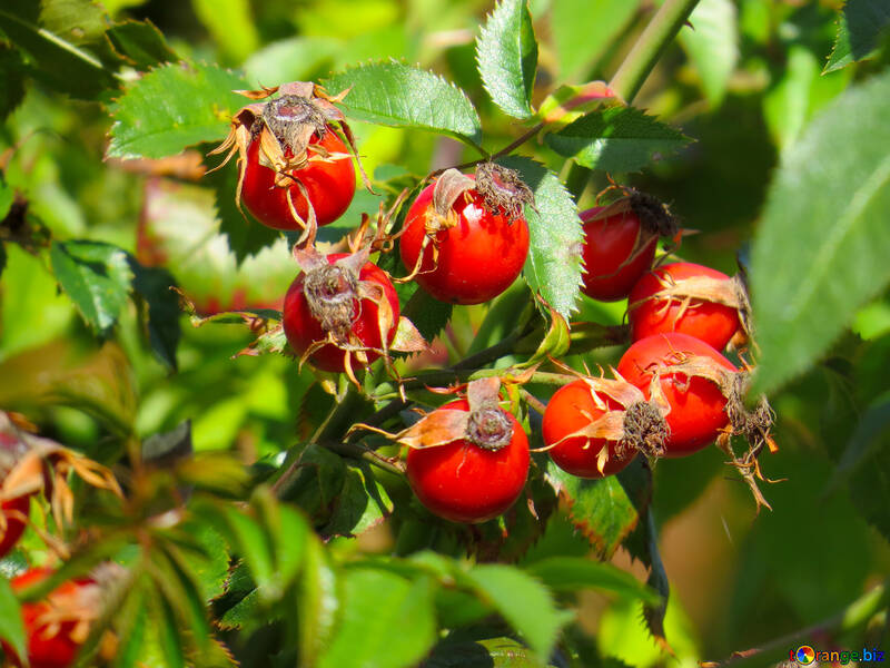 By Nature Rosehip Oil Review