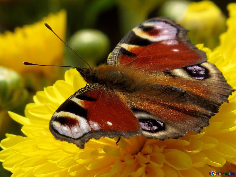 Schmetterling №35840