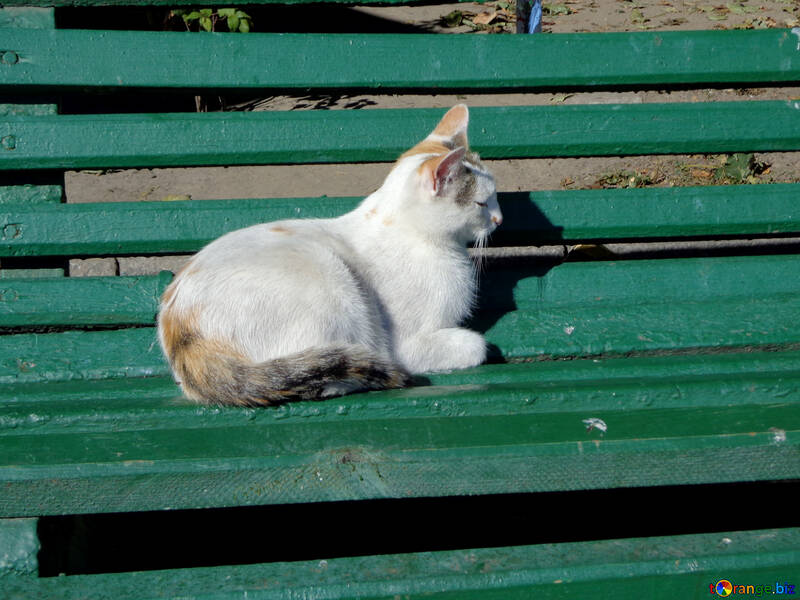 Cat on the bench №35855