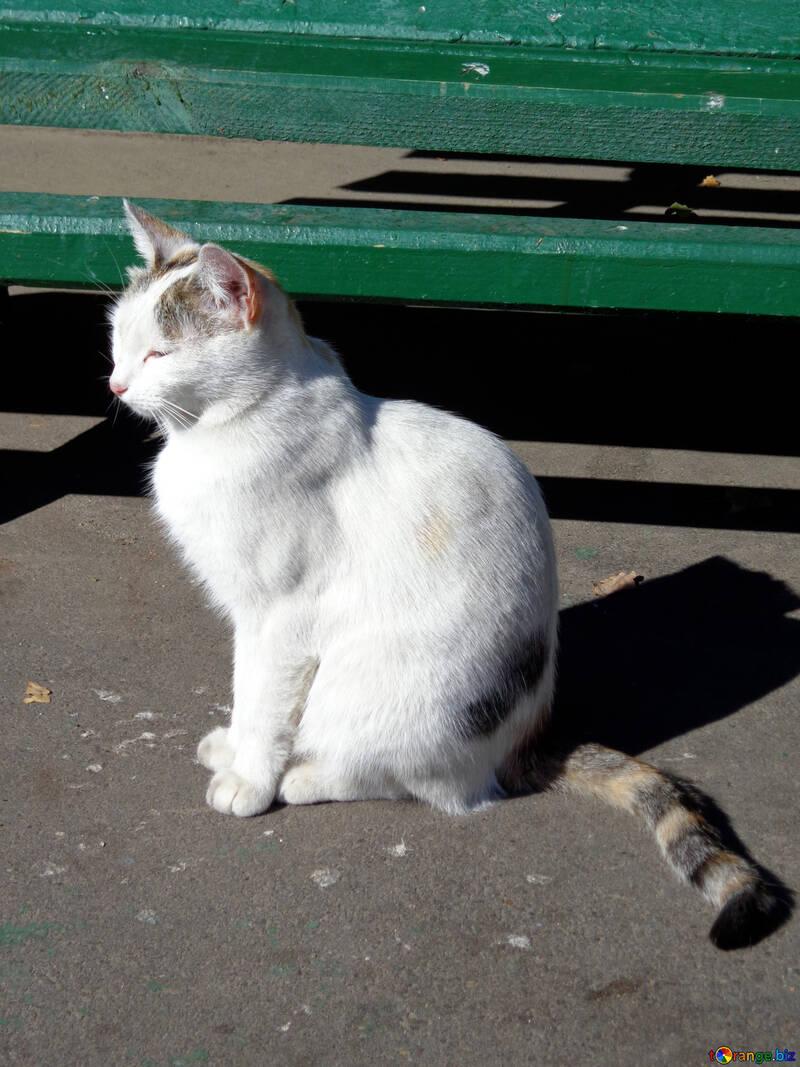 Cat sitting №35856