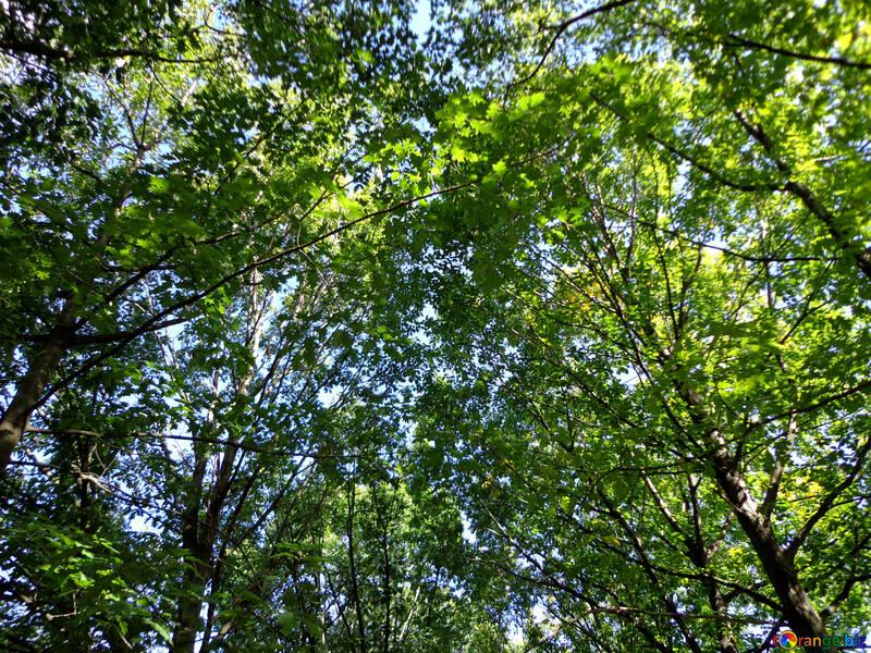 Под деревьями  №35890