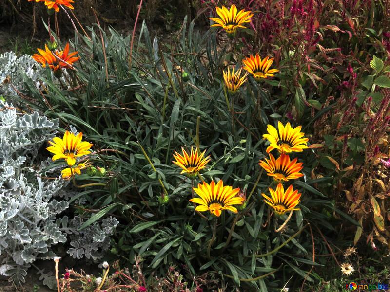 Garden flowers №35806