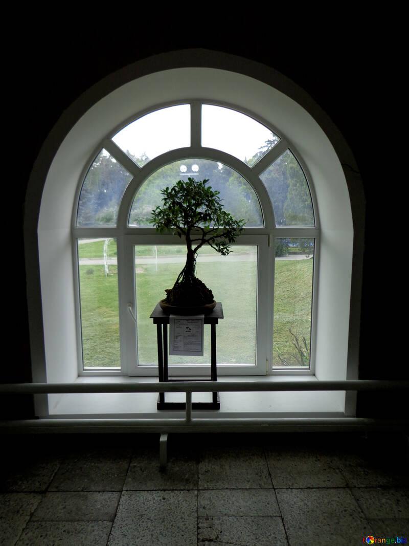 La planta junto la ventana №35747