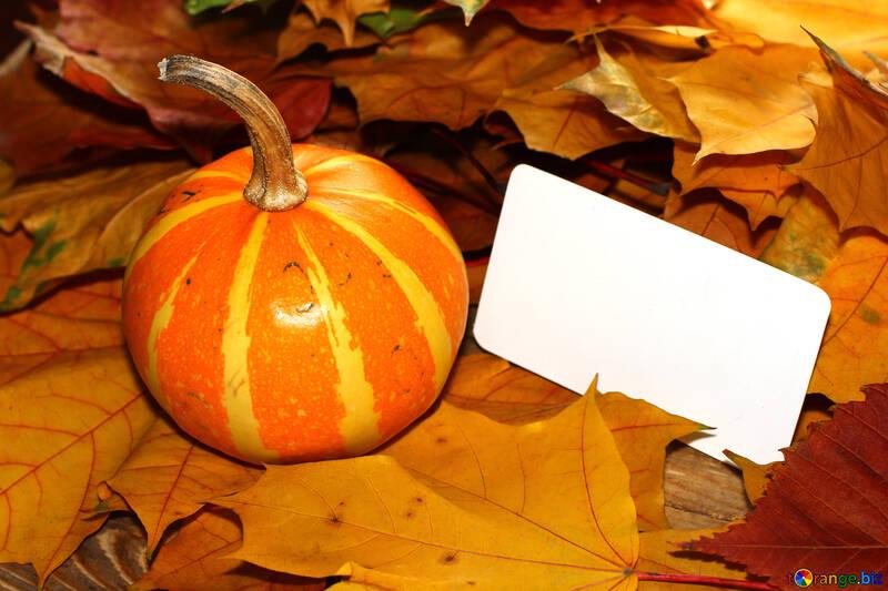 Tarjeta de invitación para halloween №35194