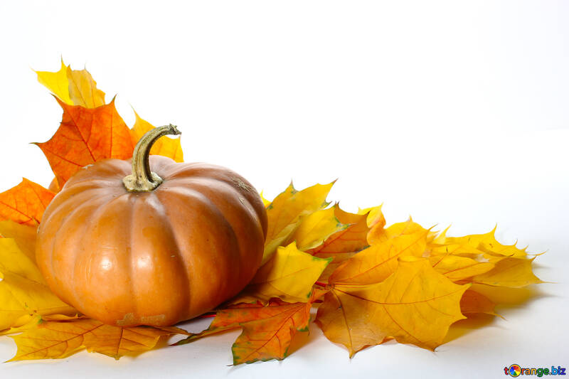 Pumpkin with autumn leaves for card №35466