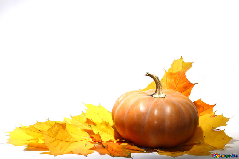 Pumpkin with autumn leaves no background №35463