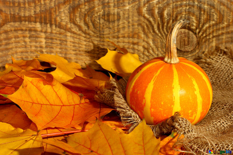 Beautiful picture with pumpkin and autumn leaves №35453