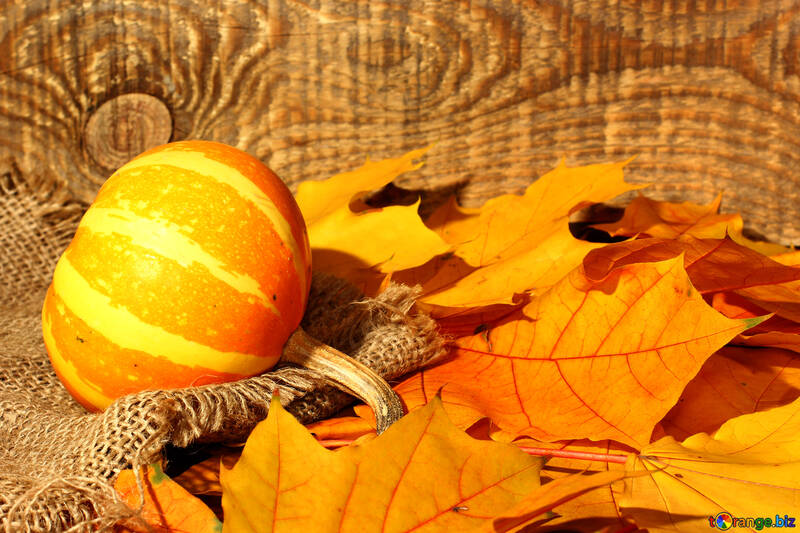 Autumn cover of Facebook with pumpkin №35450