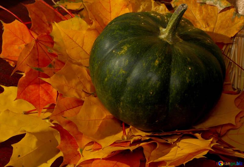 Green pumpkin on autumn leaves №35396