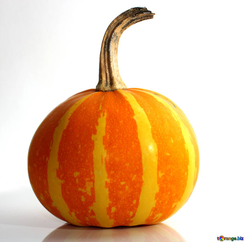Beautiful pumpkin №35040