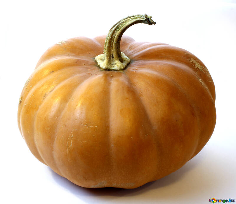 Big pumpkin in isolation №35005