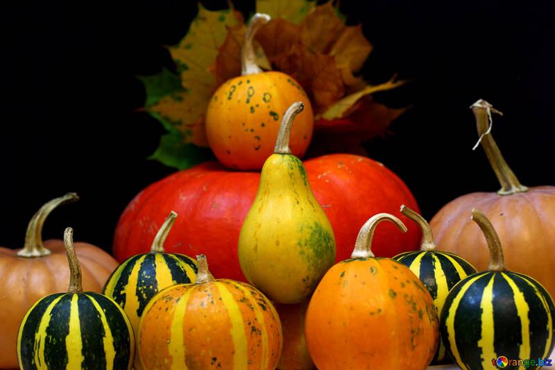 A lot of pumpkins №35124