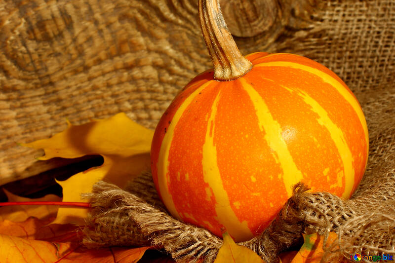 Still life with pumpkin on cloth background №35456