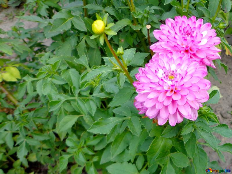 Fleurs de jardin №35940