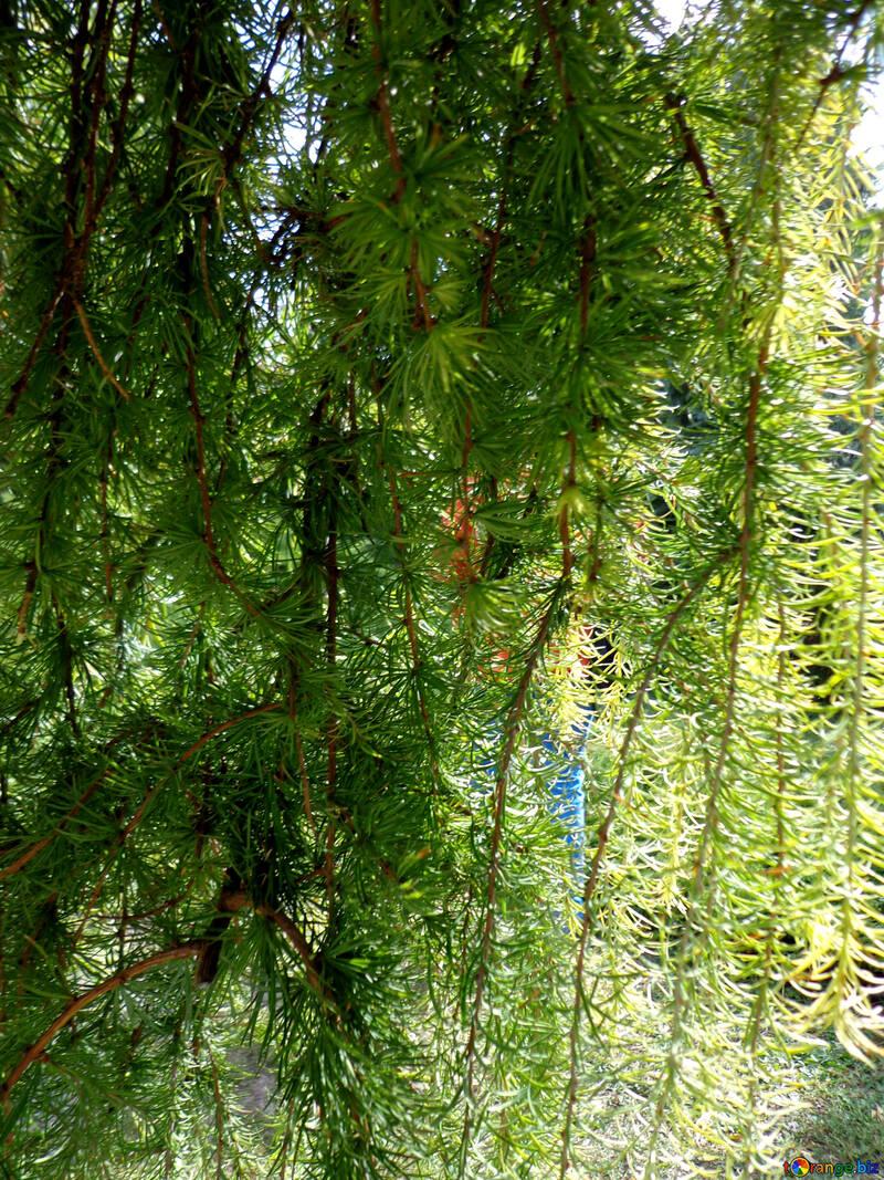 Lejos del árbol para №35903