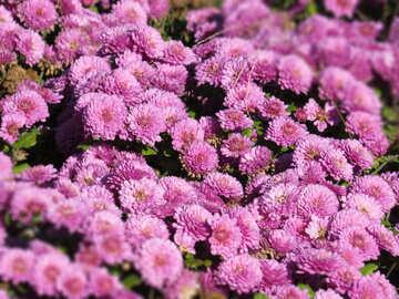 Sfondo fiori di congratulazione №36906