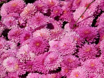 Lo sfondo pieno di fiori №36903