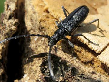 Beetle pest №36362