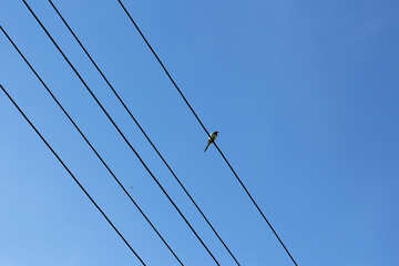 A little bird sitting on the wires №36810
