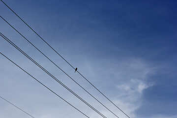 A little bird sitting on the wires №36811