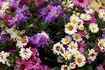 Bouquet of autumn flowers №36284