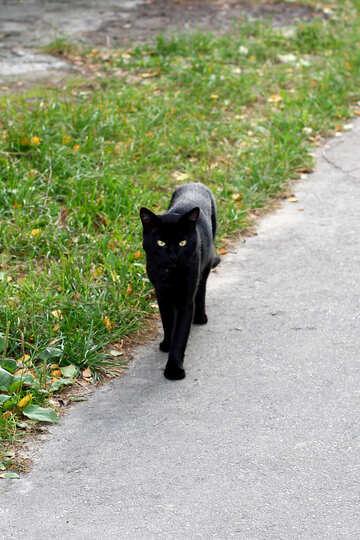 Black Cat №36144