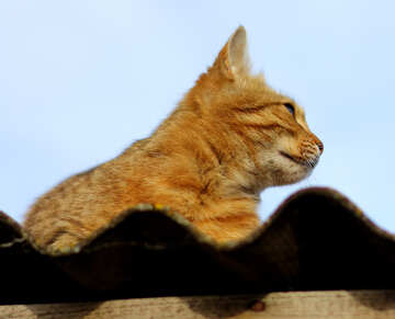 cat №36544