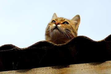 Cat muzzle №36545
