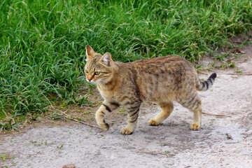 Cat`s gait №36550