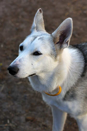 Muzzle dog №36860