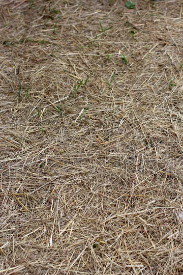 The texture of dry grass on Earth №36820