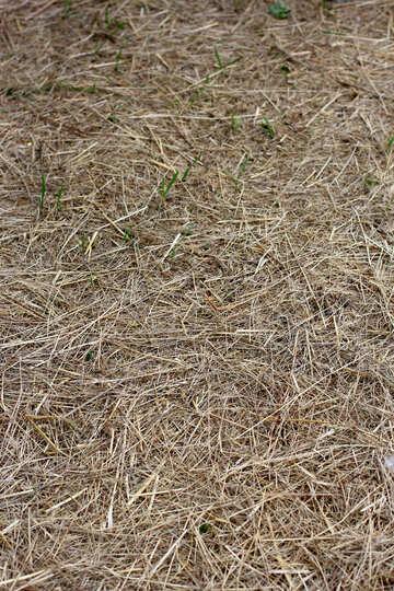 La trama di erba secca sulla terra №36820