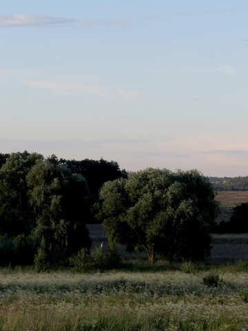 Сельский летний вечер  №36727