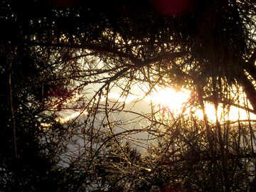 Serata estiva nella foresta №36707