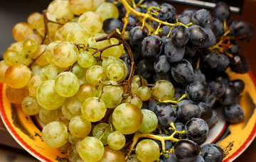 Table grapes №36288