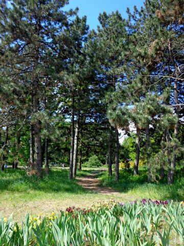 Bellissimo giardino №36846