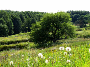 Summer nature №36693
