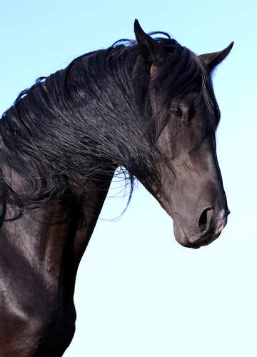 Beautiful portrait of horse №36646