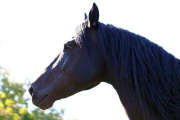 Horse`s head №36659