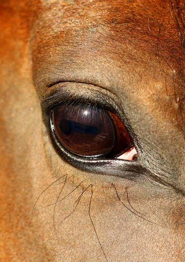 Horse eye №36575