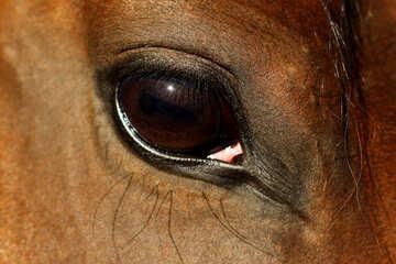 Horse eye №36576