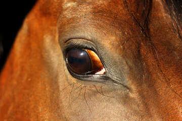 Equine eye №36578