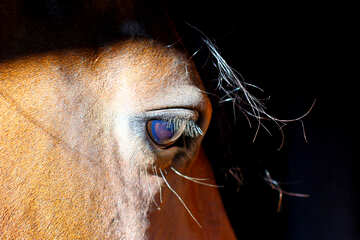 View horse №36583