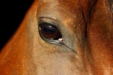 View horses №36573